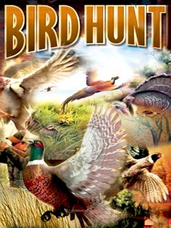 Bird Hunt Mobile Game