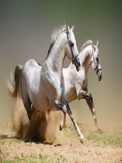 Horse Mobile Software