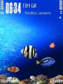 Aquarium Mobile Theme