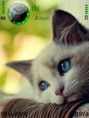 Blue Eyes Cat Mobile Theme