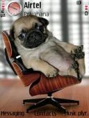 Lazy Dog Mobile Theme