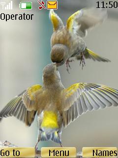 Two Birds Theme Mobile Theme