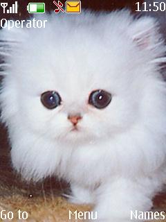 Fluffy Kitten Mobile Theme