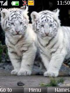 White Tigers Mobile Theme