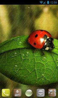 Ladybug Cute Android Theme Mobile Theme