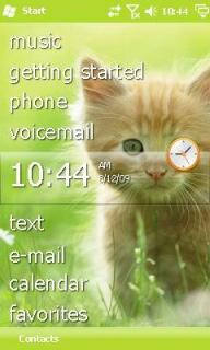 Kitten Theme Mobile Theme