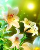Flower Revelo Theme Mobile Theme