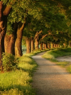 Woods Mobile Theme