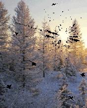 Winter Cold Mobile Theme