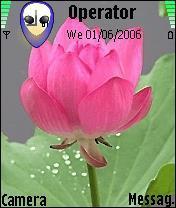Lotus Flower Theme Mobile Theme