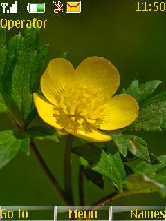 Yellow Flower Nokia Theme Mobile Theme
