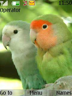 Parrot Nokia Theme Mobile Theme