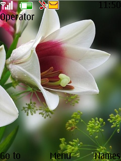 Nice Flower Theme Mobile Theme