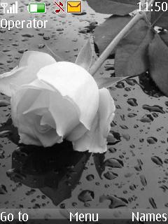 Beutiful Rose Mobile Theme