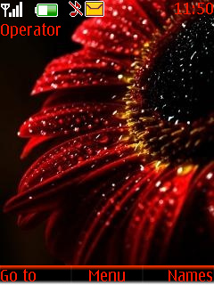 Red Flower S40 Theme Mobile Theme