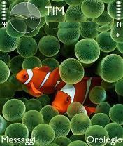 Clown Fish Mobile Theme