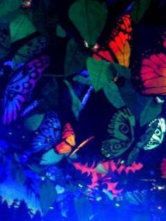Btterfly Mobile Wallpaper