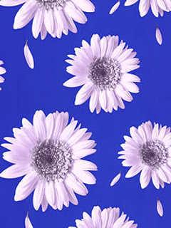 Daisyinblu Mobile Wallpaper