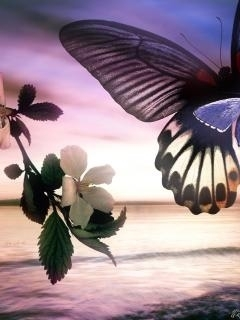 Butterfly Imns Mobile Wallpaper