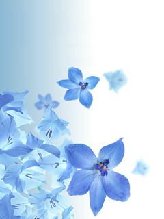 Floral Blue Mobile Wallpaper