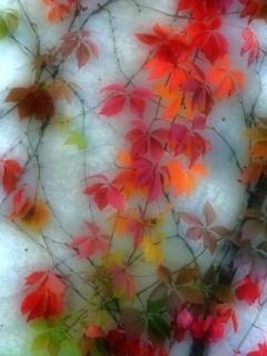 Coloures Mobile Wallpaper