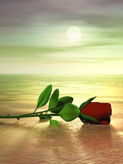 Natural Rose Mobile Wallpaper