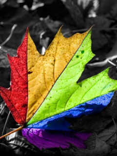 Color Leafs Mobile Wallpaper
