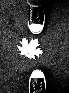 Convers And White Leaf Mobile Wallpaper