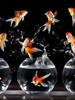Fish Mobile Wallpaper