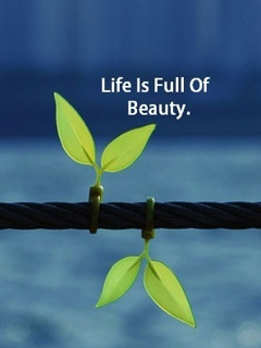 Life Is Beauty Mobile Wallpaper