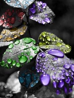 Rainbow Drops Mobile Wallpaper