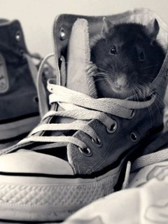 Rat In Shoes Mobile Wallpaper