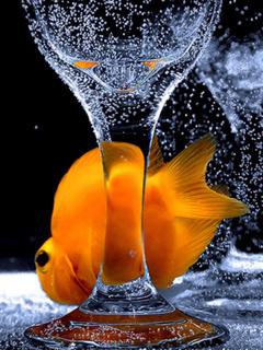 Cute Fish Mobile Wallpaper