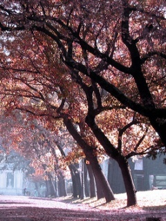 Pink Trees Mobile Wallpaper
