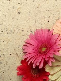 Pretty Flowers Mobile Wallpaper