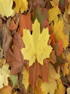 Tree Leaf Mobile Wallpaper