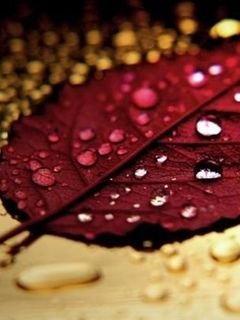 Drops On Leaf Mobile Wallpaper