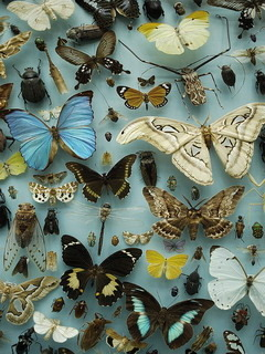 Butterfly Collection Mobile Wallpaper