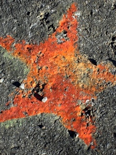 Orange Star Mobile Wallpaper