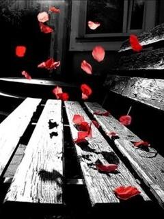 Red Petals Mobile Wallpaper