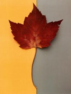 Leaf Art Mobile Wallpaper