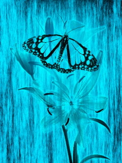 Flower Blue Butterfly Mobile Wallpaper