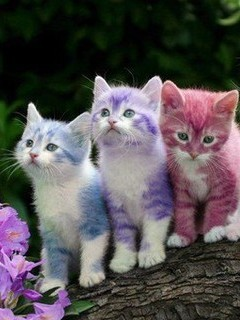 Colour Kittens Mobile Wallpaper