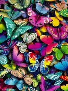 Pretty Colors Butterflies Mobile Wallpaper