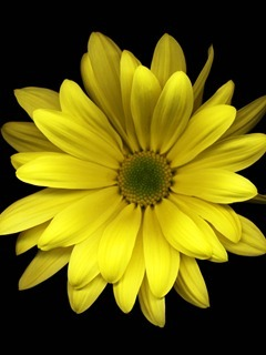 Yellow Flower Mobile Wallpaper