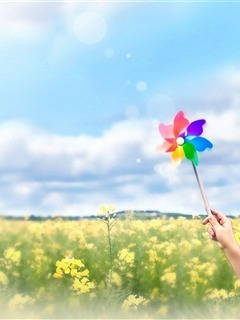 Colorful Flowers Mobile Wallpaper