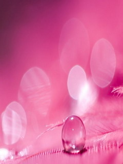 Pink Drop Mobile Wallpaper
