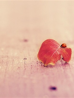 Red Leaf And Insect Mobile Wallpaper