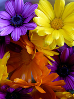 Cute Flowers Mobile Wallpaper
