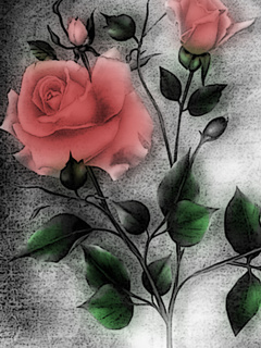 Pink Roses  Mobile Wallpaper
